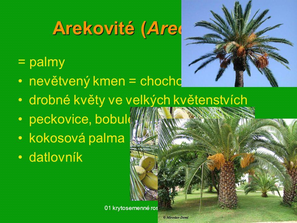 Arekovité (Arecaceae)