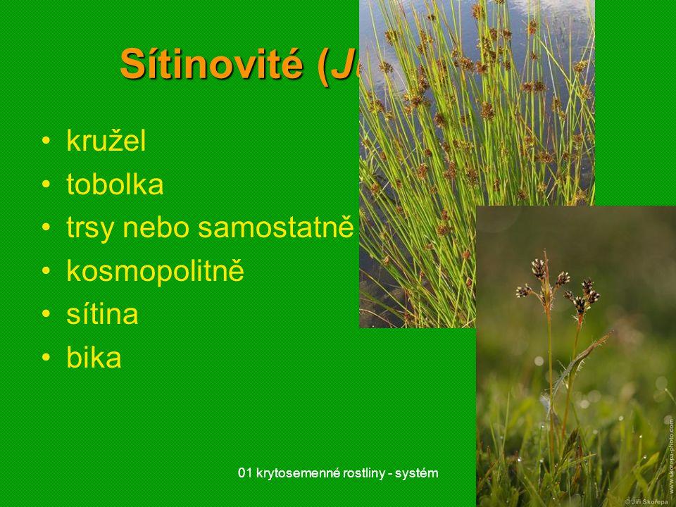 Sítinovité (Juncaceae)