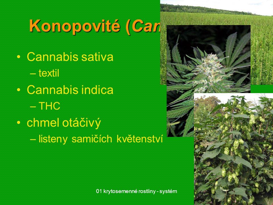 Konopovité (Cannabaceae)
