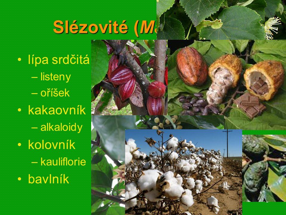 Slézovité (Malvaceae)