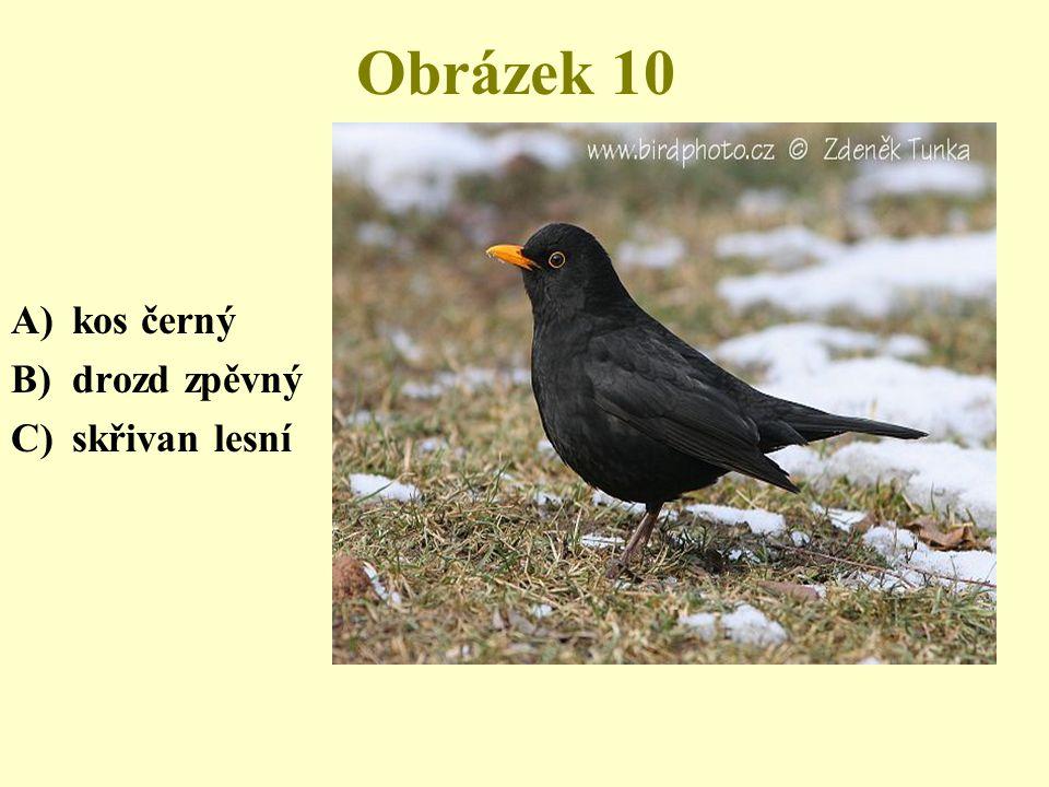 Obrázek 10 kos černý drozd zpěvný skřivan lesní