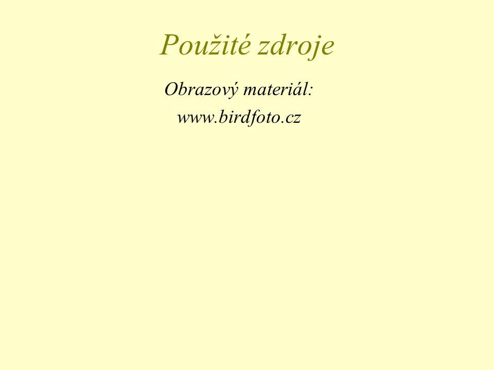 Obrazový materiál: www.birdfoto.cz