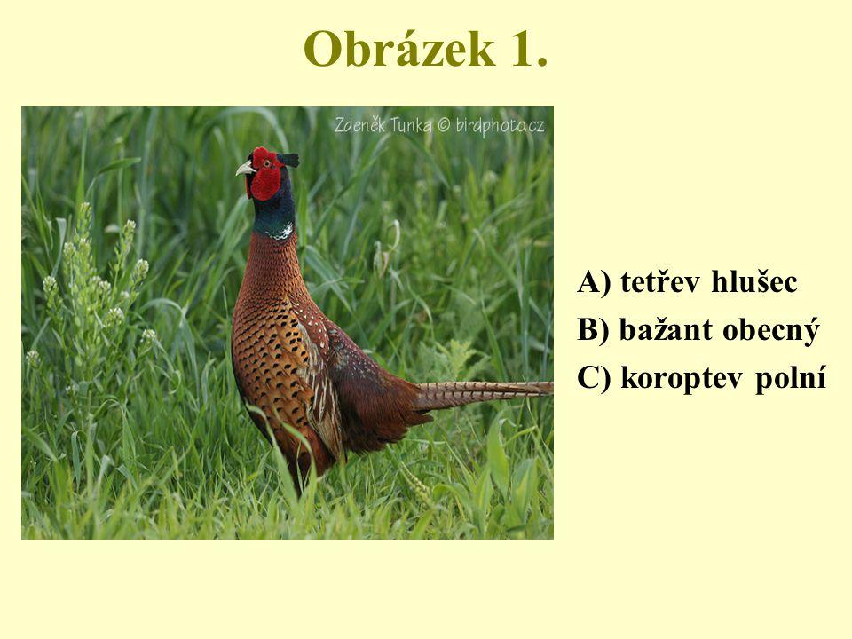 Obrázek 1. A) tetřev hlušec B) bažant obecný C) koroptev polní
