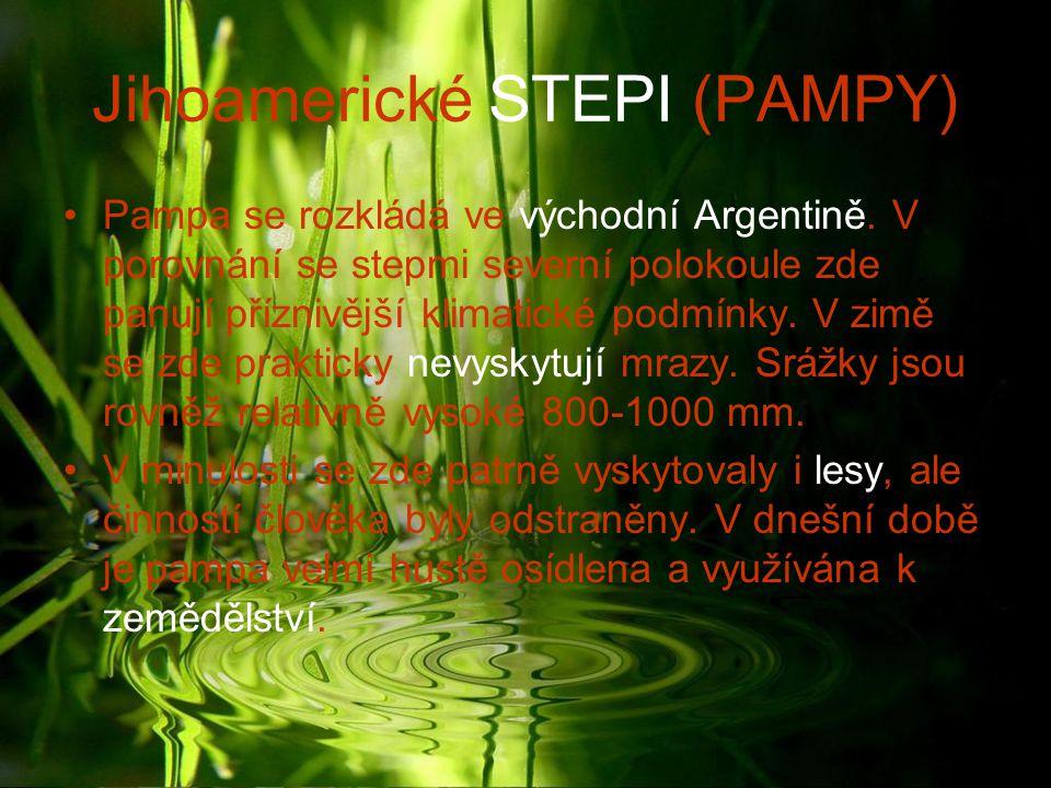 Jihoamerické STEPI (PAMPY)