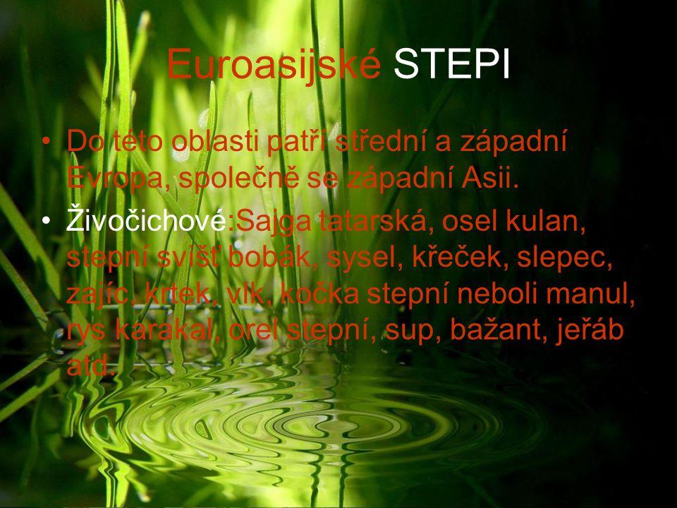 Euroasijské STEPI Do této oblasti patří střední a západní Evropa, společně se západní Asii.