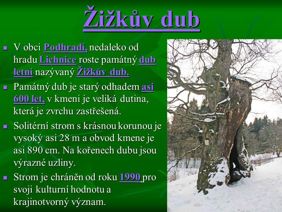 Žižkův dub V obci Podhradí, nedaleko od hradu Lichnice roste památný dub letní nazývaný Žižkův dub.