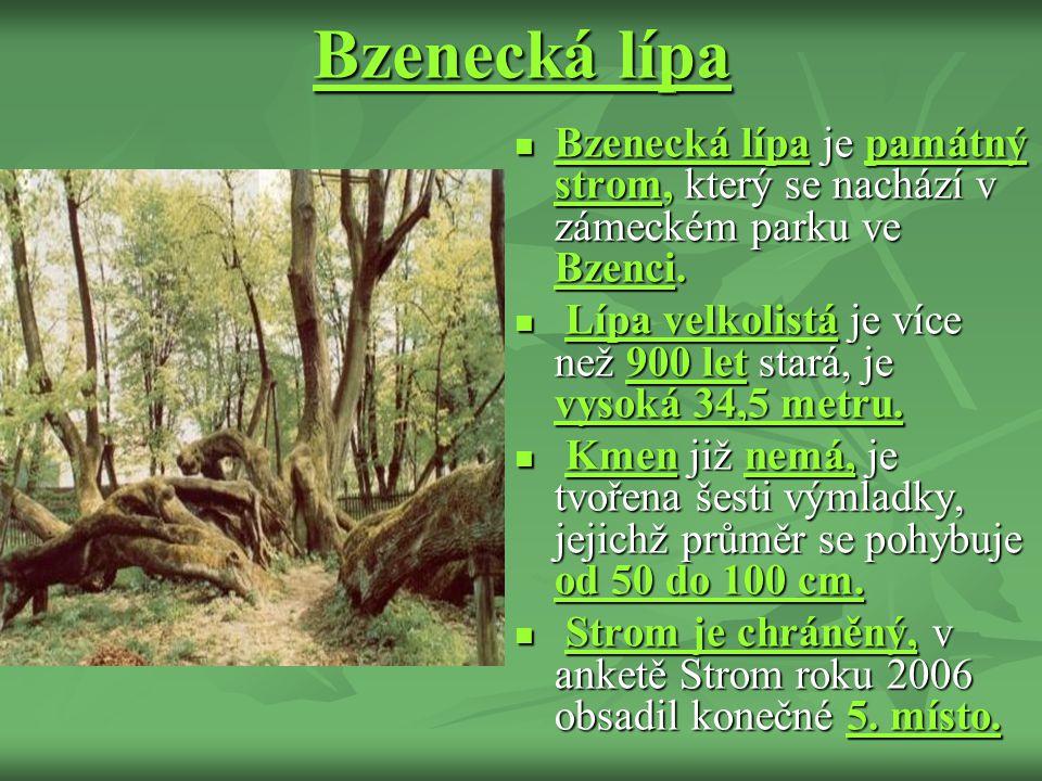 Bzenecká lípa Bzenecká lípa je památný strom, který se nachází v zámeckém parku ve Bzenci.