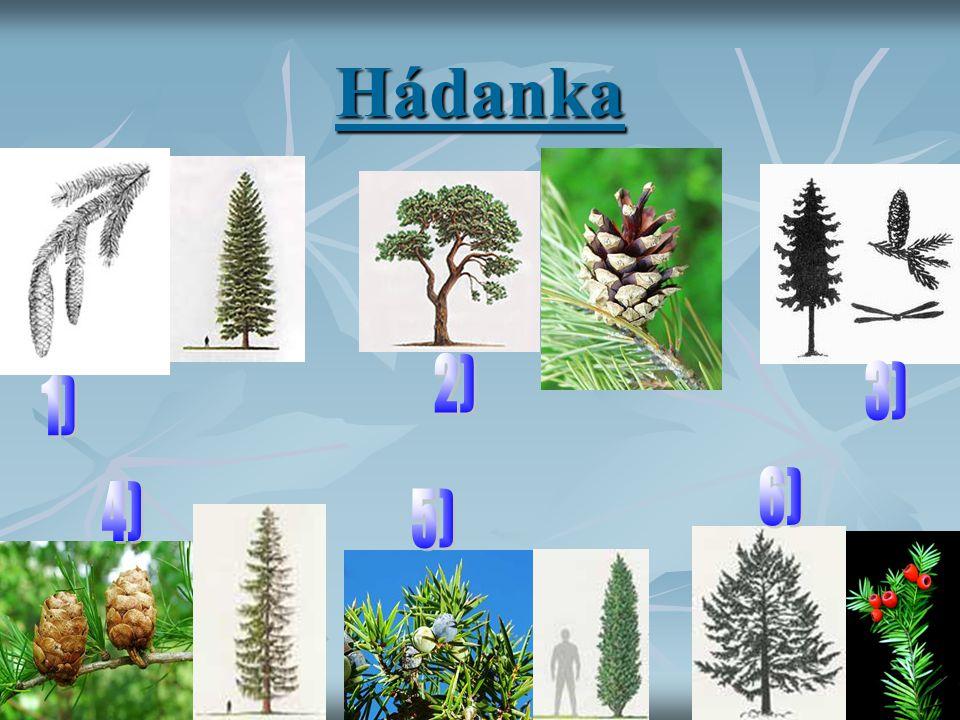 Hádanka 2) 3) 1) 6) 4) 5)