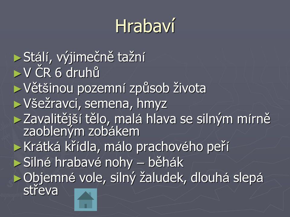 Hrabaví Stálí, výjimečně tažní V ČR 6 druhů