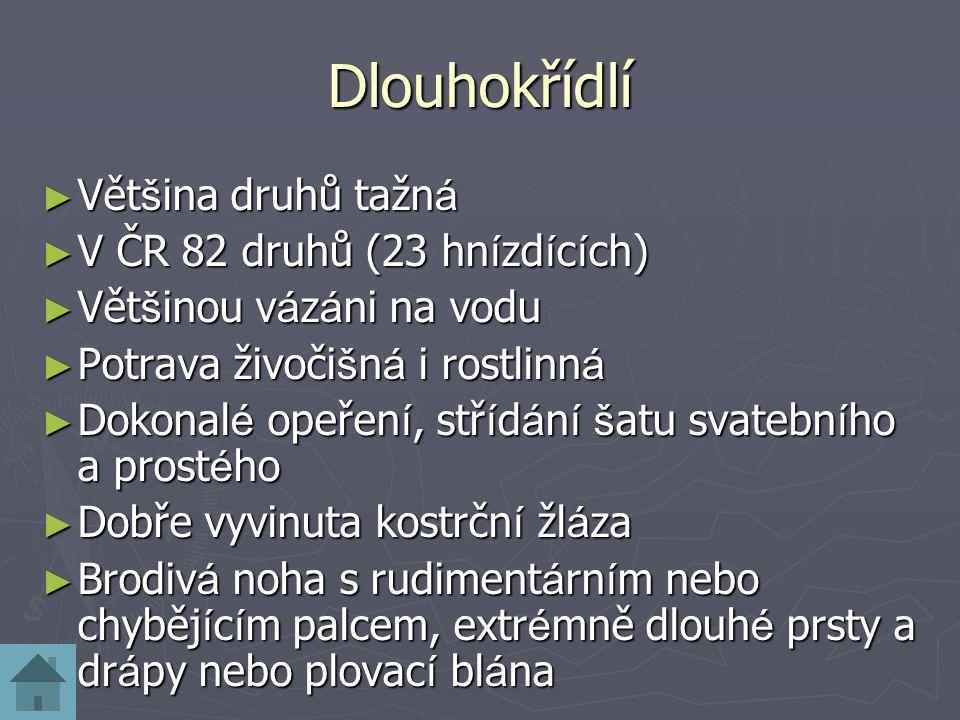 Dlouhokřídlí Většina druhů tažná V ČR 82 druhů (23 hnízdících)