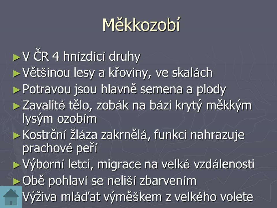 Měkkozobí V ČR 4 hnízdící druhy Většinou lesy a křoviny, ve skalách