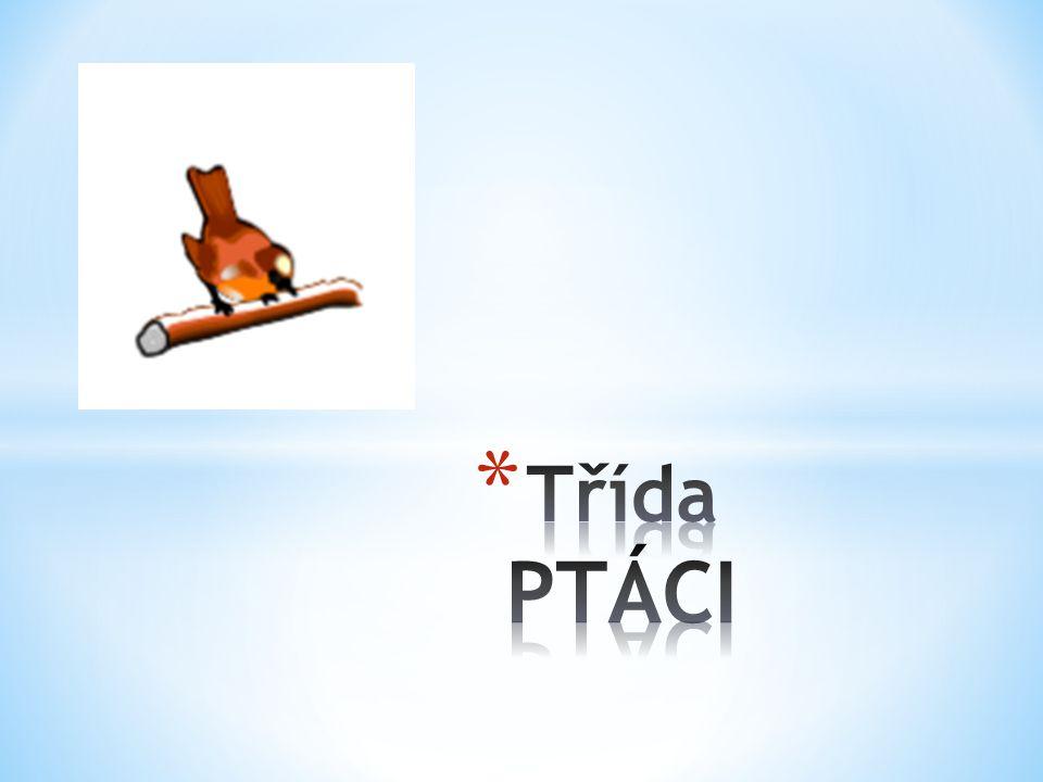 Třída PTÁCI