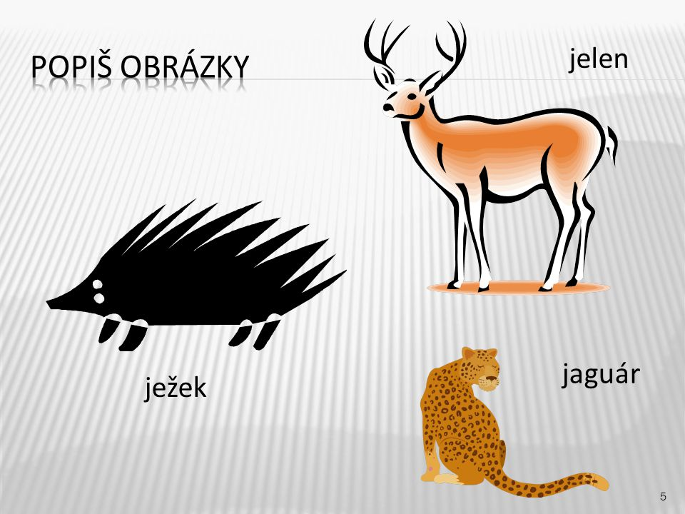 Popiš obrázky jelen jaguár ježek