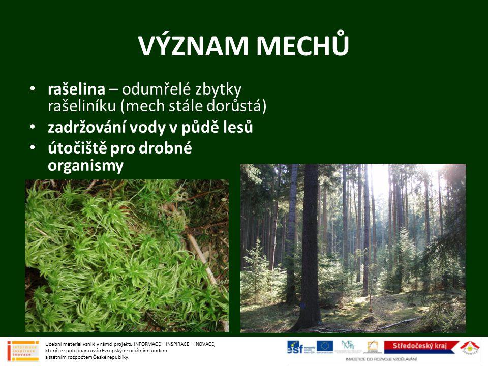 VÝZNAM MECHŮ rašelina – odumřelé zbytky rašeliníku (mech stále dorůstá) zadržování vody v půdě lesů.