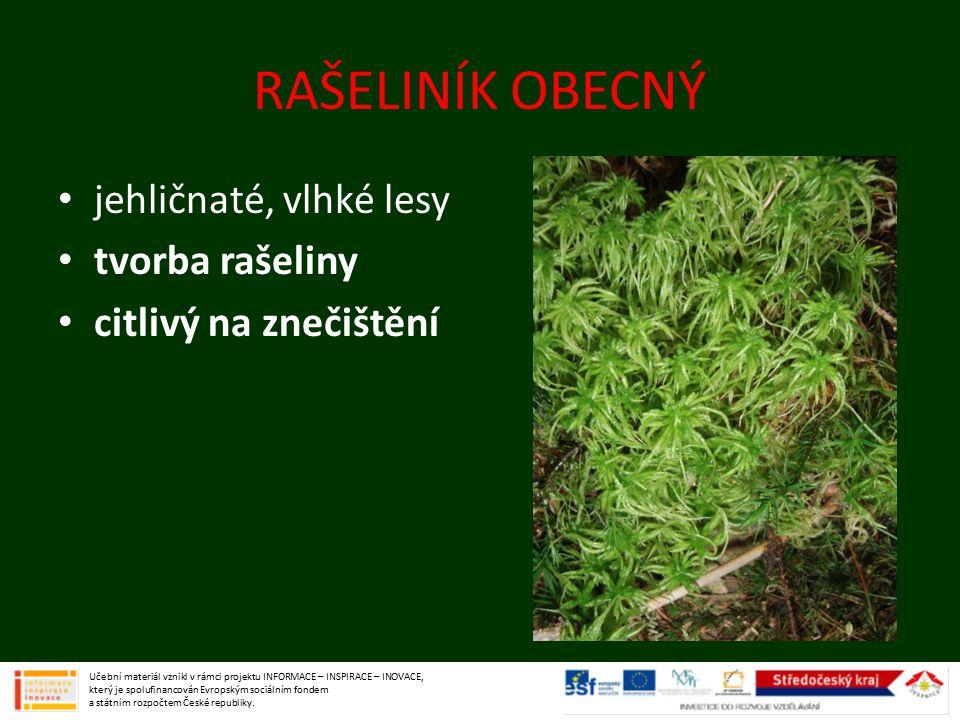 RAŠELINÍK OBECNÝ jehličnaté, vlhké lesy tvorba rašeliny