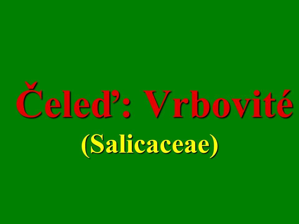 Čeleď: Vrbovité (Salicaceae)