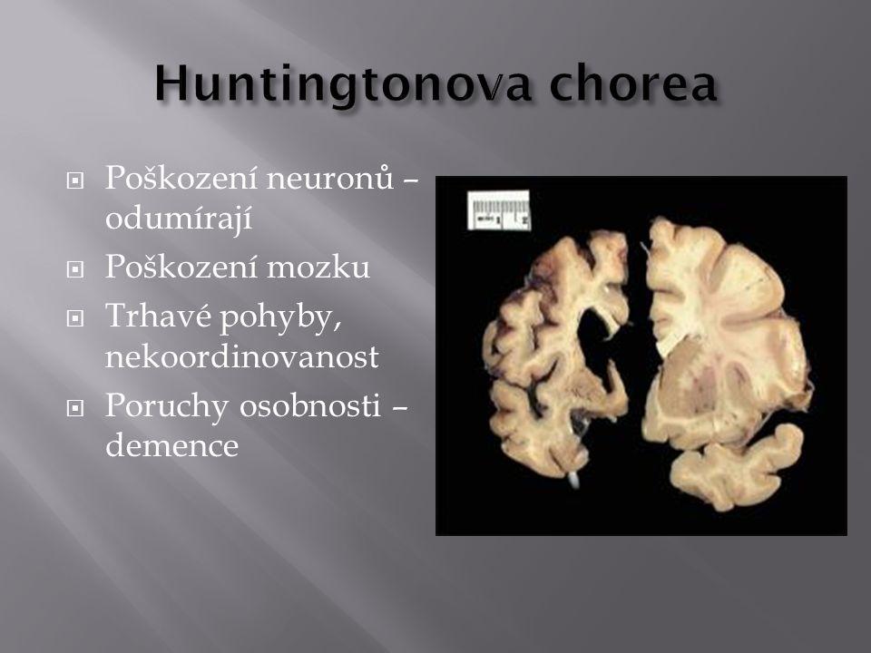 Huntingtonova chorea Poškození neuronů – odumírají Poškození mozku