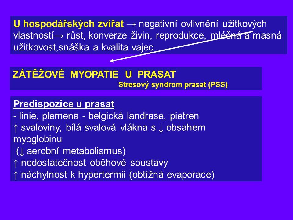 ZÁTĚŽOVÉ MYOPATIE U PRASAT