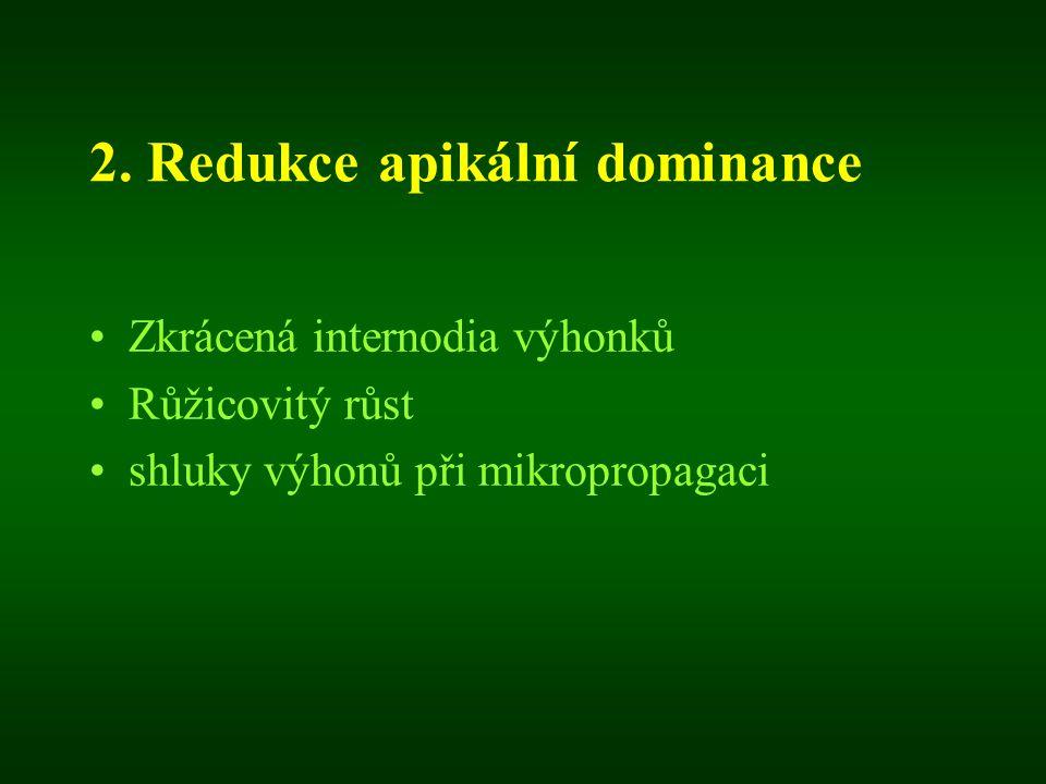 2. Redukce apikální dominance