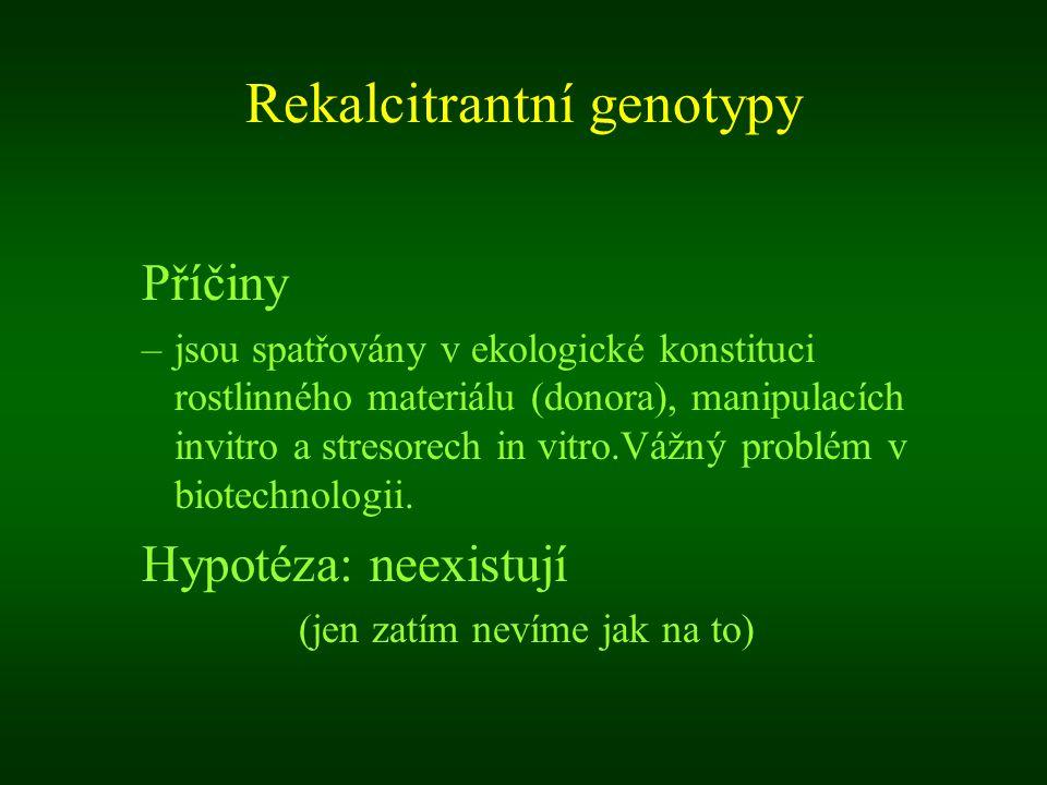 Rekalcitrantní genotypy