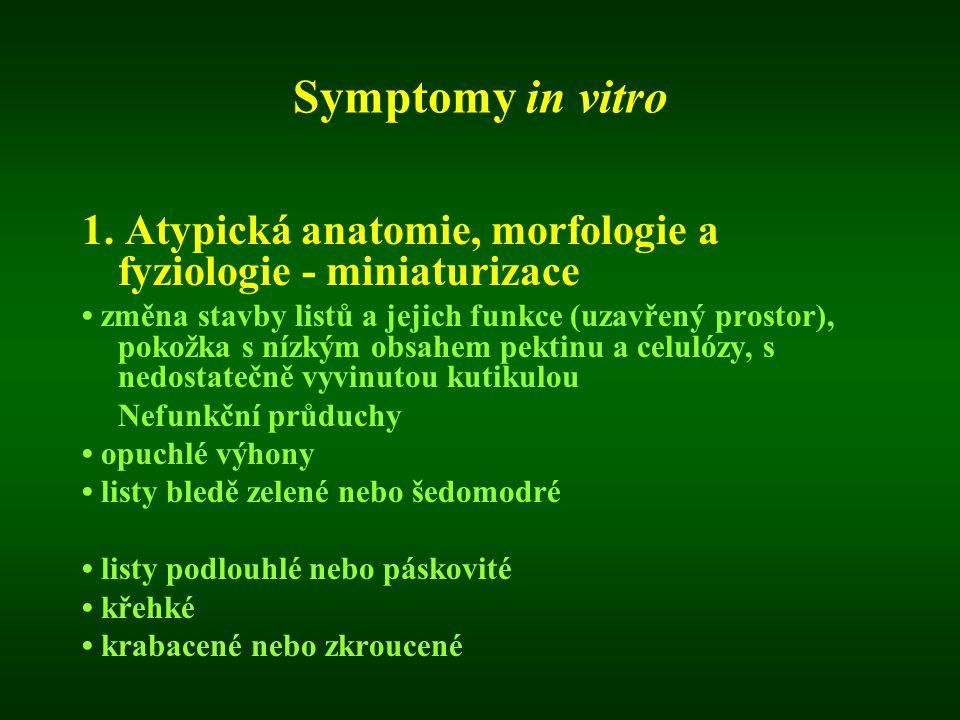 Symptomy in vitro 1. Atypická anatomie, morfologie a fyziologie - miniaturizace.