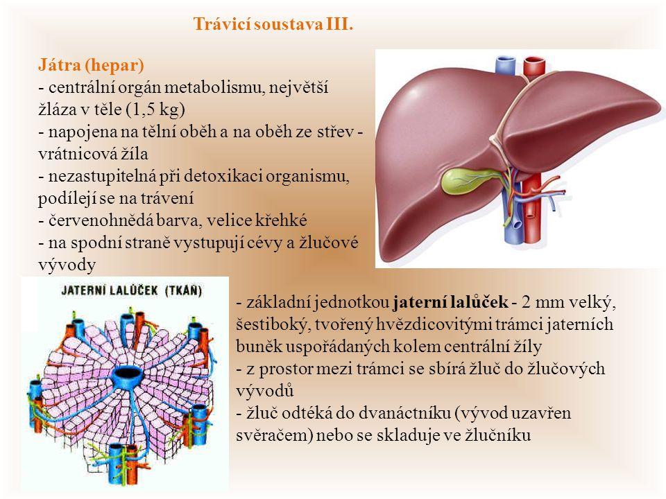 Trávicí soustava III. Játra (hepar) - centrální orgán metabolismu, největší žláza v těle (1,5 kg)