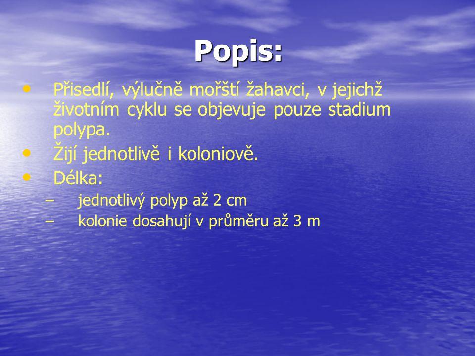 Popis: Přisedlí, výlučně mořští žahavci, v jejichž životním cyklu se objevuje pouze stadium polypa.