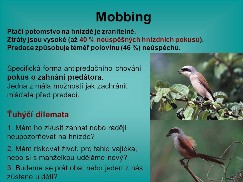 Mobbing Ťuhýčí dilemata