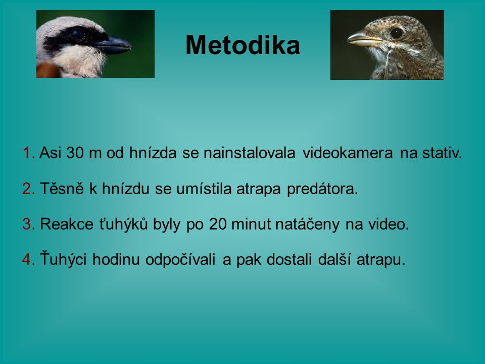 Metodika 1. Asi 30 m od hnízda se nainstalovala videokamera na stativ.