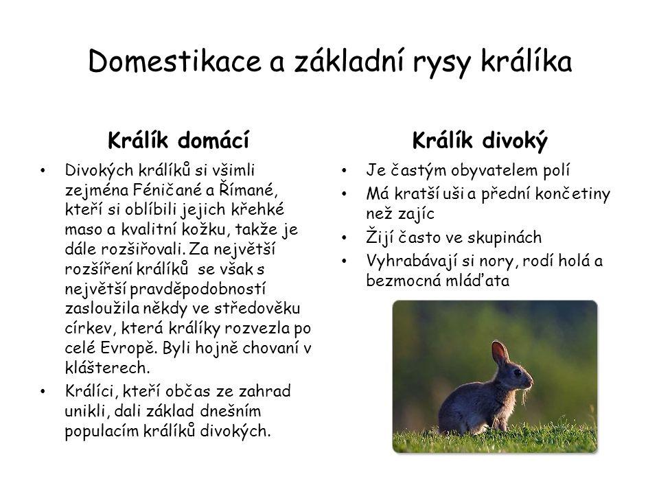 Domestikace a základní rysy králíka