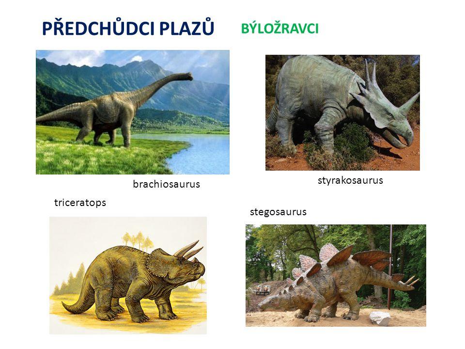 PŘEDCHŮDCI PLAZŮ BÝLOŽRAVCI styrakosaurus brachiosaurus triceratops