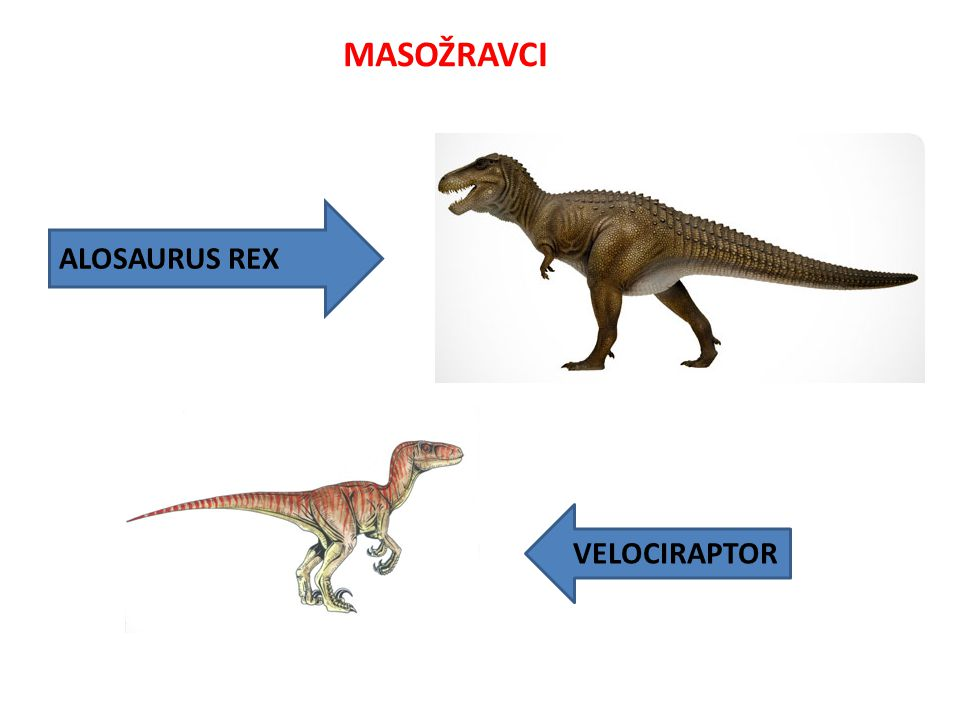 MASOŽRAVCI ALOSAURUS REX VELOCIRAPTOR