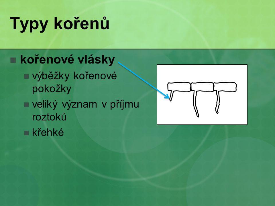 Typy kořenů kořenové vlásky výběžky kořenové pokožky