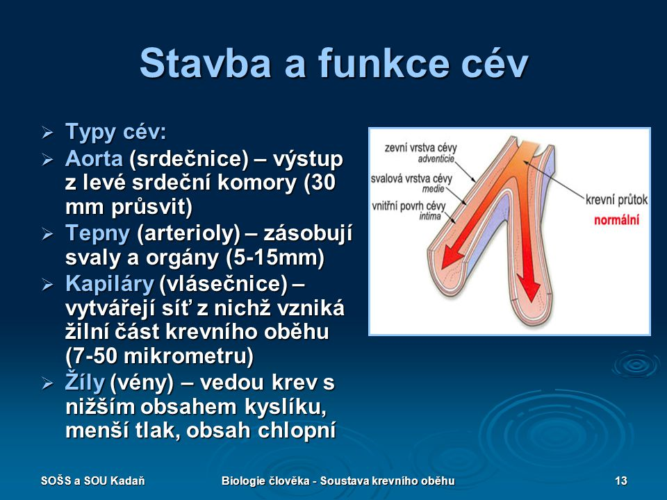 Biologie člověka - Soustava krevního oběhu