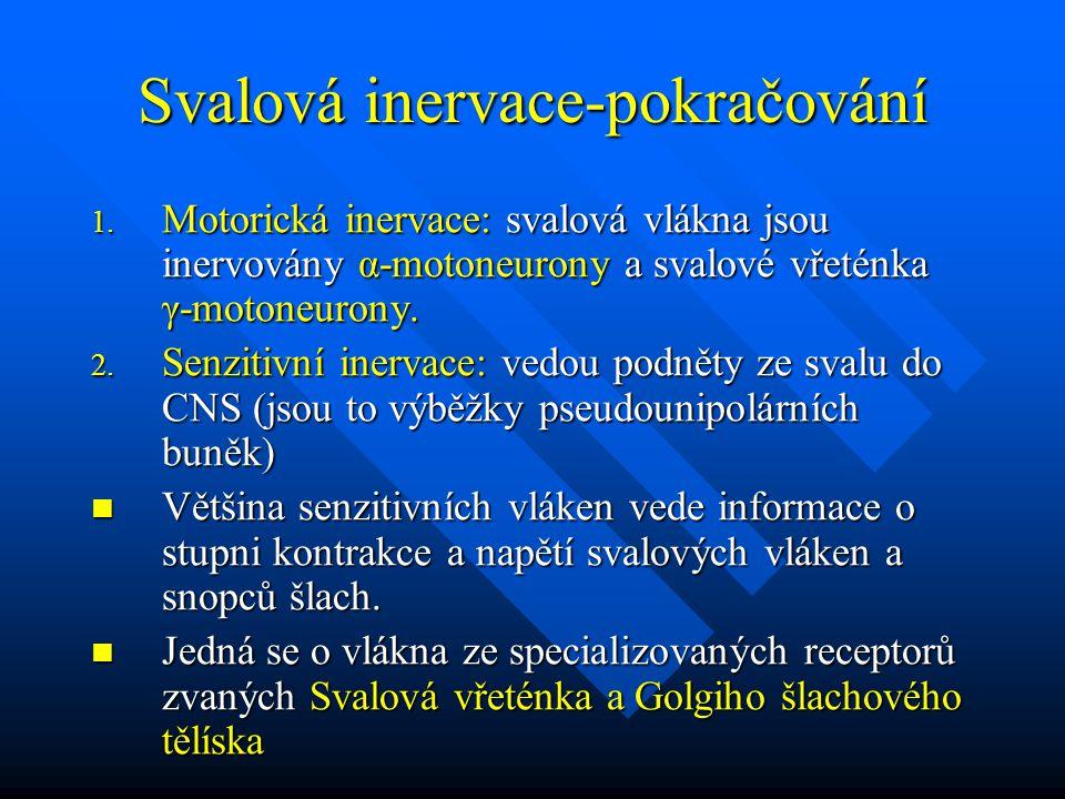 Svalová inervace-pokračování