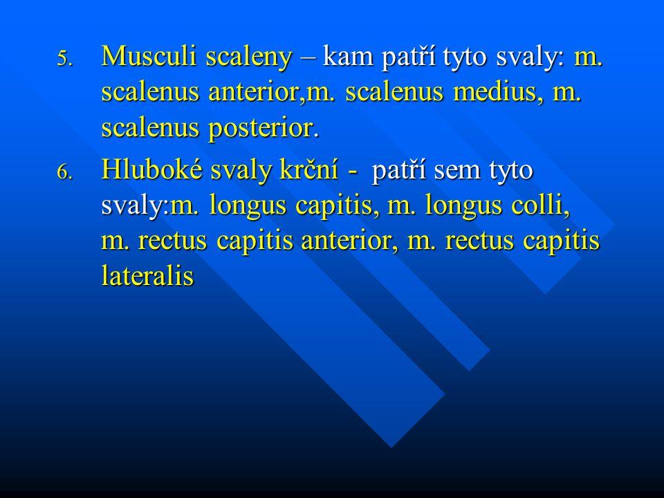 Musculi scaleny – kam patří tyto svaly: m. scalenus anterior,m