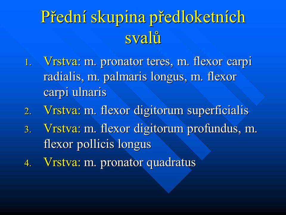 Přední skupina předloketních svalů