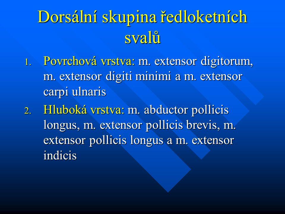 Dorsální skupina ředloketních svalů