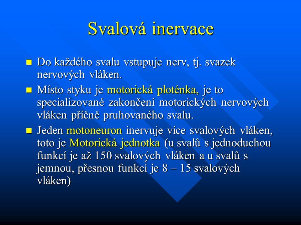 Svalová inervace Do každého svalu vstupuje nerv, tj. svazek nervových vláken.