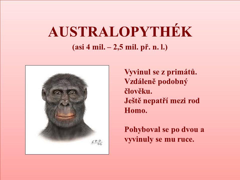 AUSTRALOPYTHÉK (asi 4 mil. – 2,5 mil. př. n. l.) Vyvinul se z primátů.