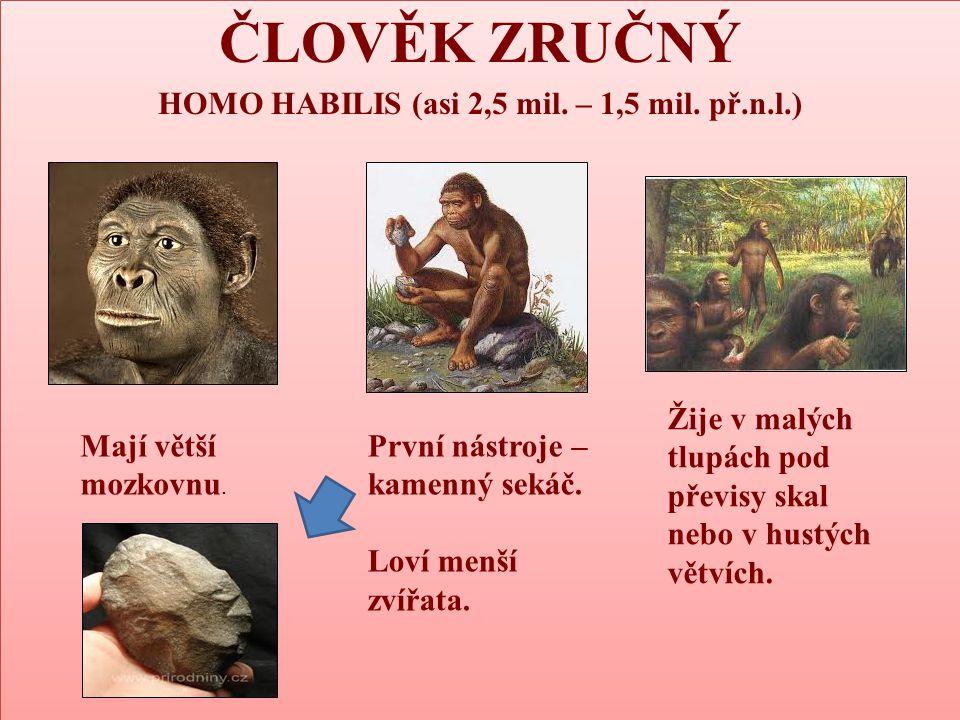 HOMO HABILIS (asi 2,5 mil. – 1,5 mil. př.n.l.)