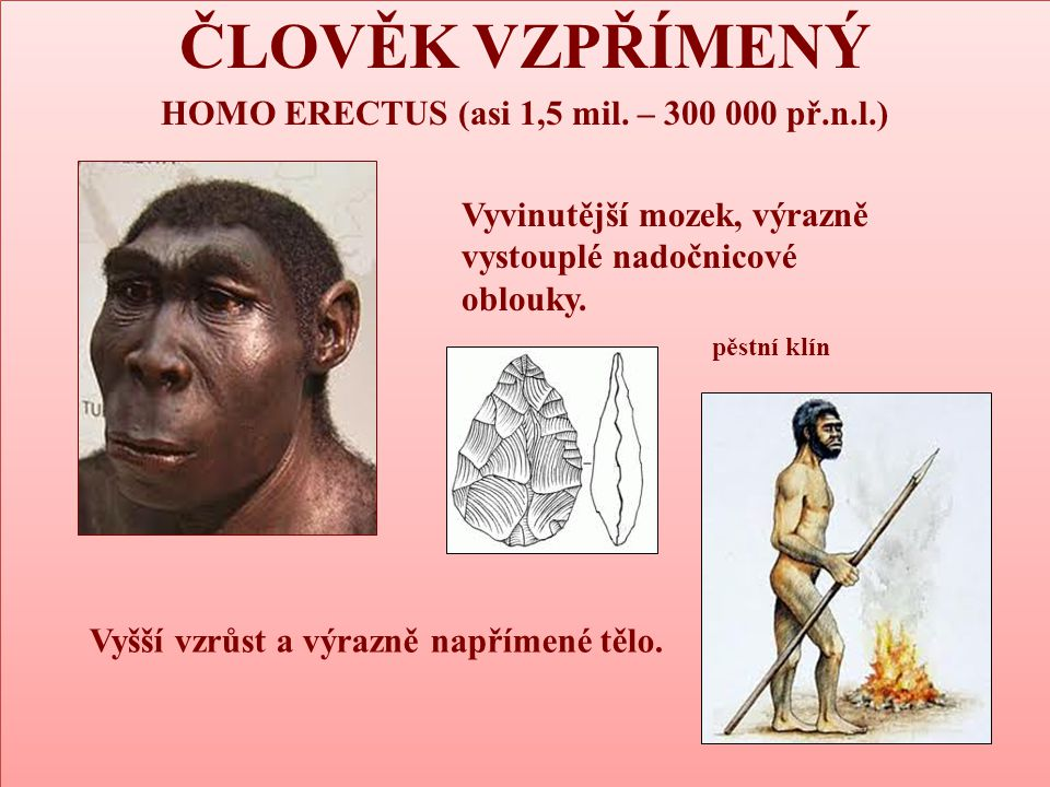 HOMO ERECTUS (asi 1,5 mil. – 300 000 př.n.l.)
