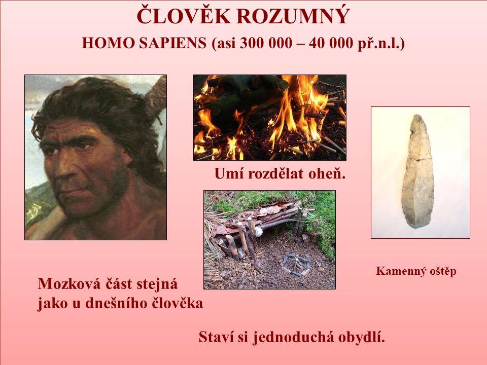 HOMO SAPIENS (asi 300 000 – 40 000 př.n.l.)