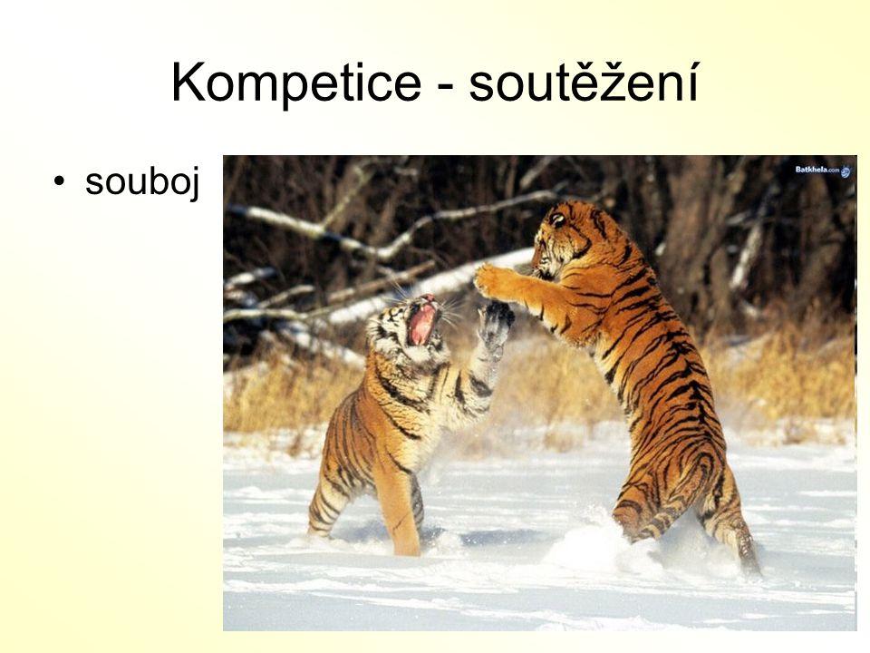 Kompetice - soutěžení souboj