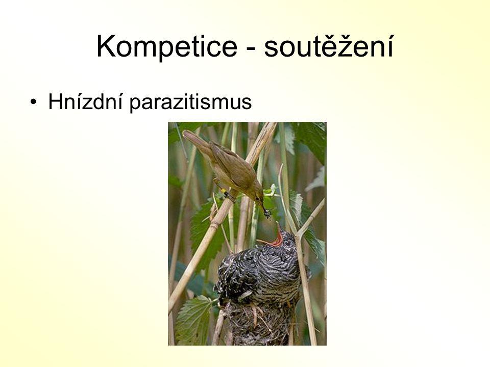 Kompetice - soutěžení Hnízdní parazitismus