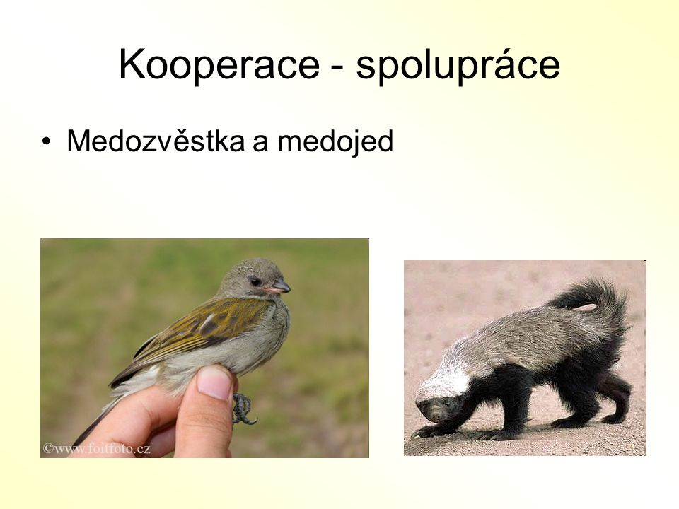 Kooperace - spolupráce
