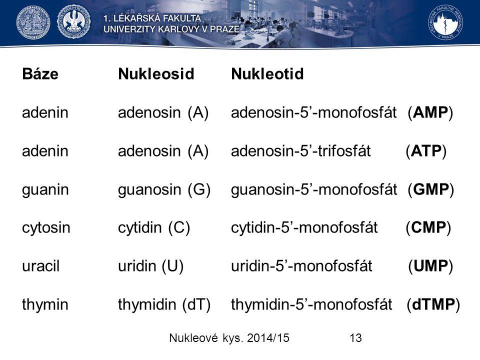 Báze Nukleosid Nukleotid