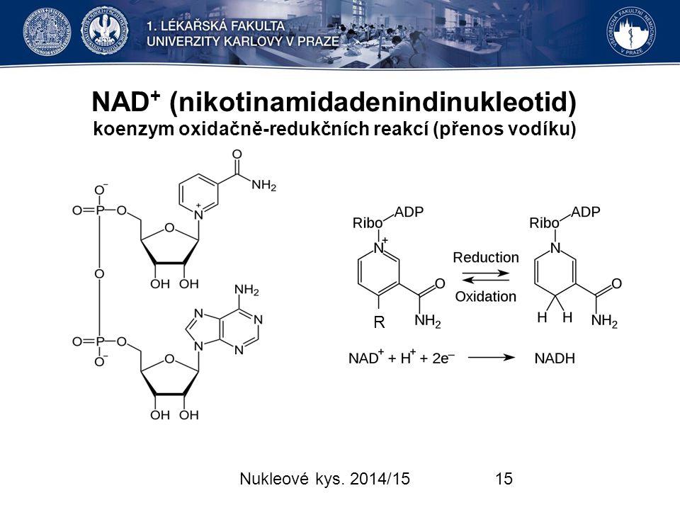 NAD+ (nikotinamidadenindinukleotid) koenzym oxidačně-redukčních reakcí (přenos vodíku)