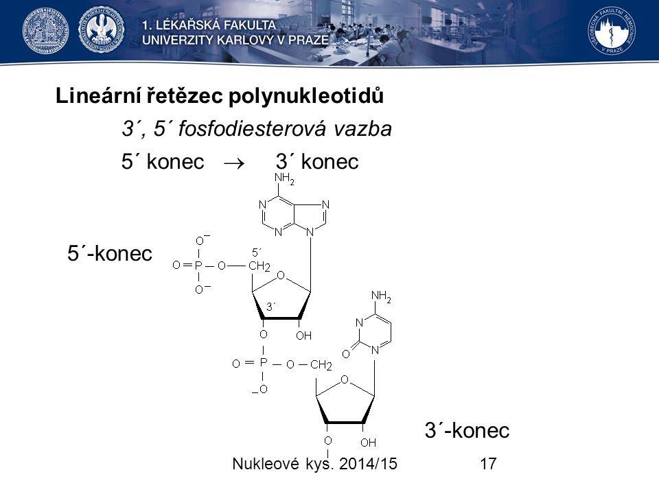 Lineární řetězec polynukleotidů 3´, 5´ fosfodiesterová vazba