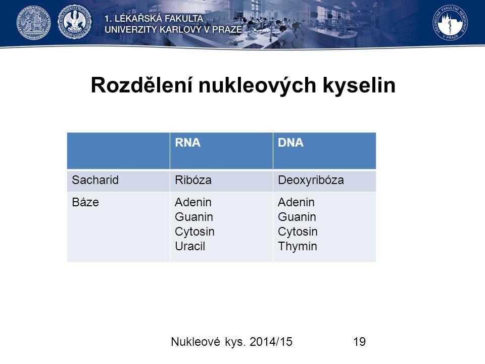 Rozdělení nukleových kyselin